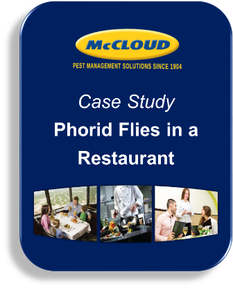 Case Study: Phorid Flies in a Restaurant